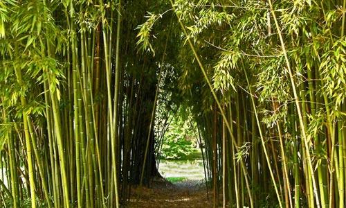 Fotos del bambú