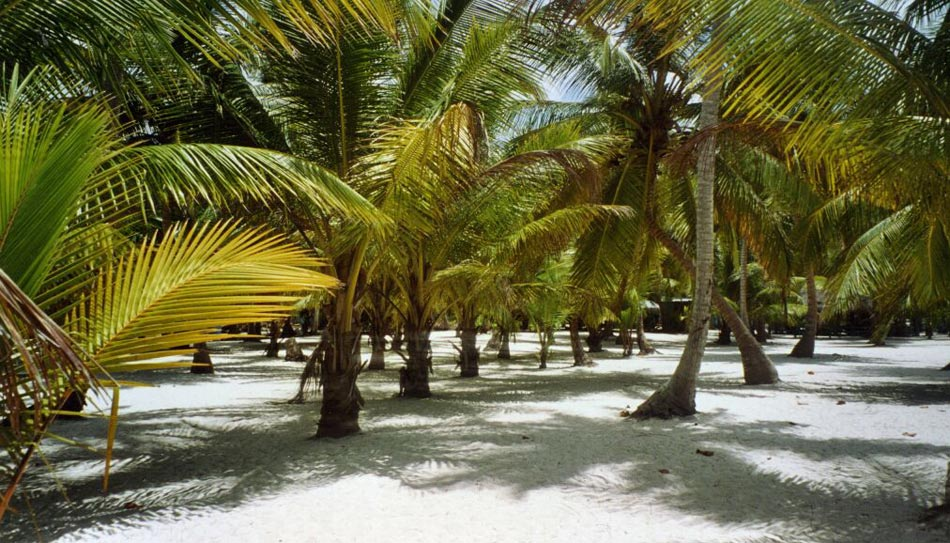 Palmeras for En zacatecas hay playa