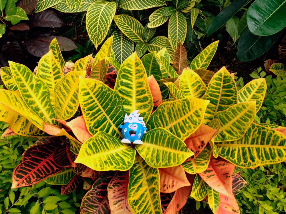 Plantas ex ticas Plantas tropicales interior
