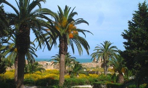 Cuidados de palmeras