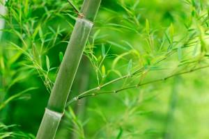Guía práctica del bambú